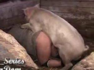 Porco fazendo sexo anal com uma mulher no chiqueiro