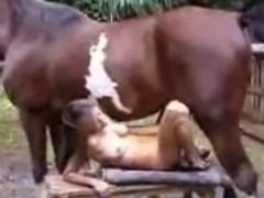 Cavalo fode buceta e bunda da mulher