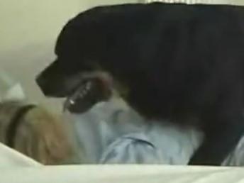 Cachorro Rottweiler Fodendo Minha Empregada Domestica
